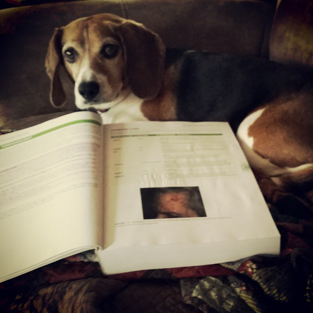 She's my favoritist study buddy! #joscountryjunction #beaglelove
