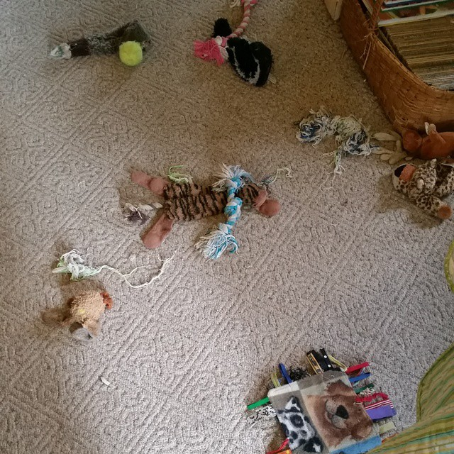 The beagles pulled all of the toys out of the toy box and then began destruction.  They destroyed two toys today #joscountryjunction #beaglelove