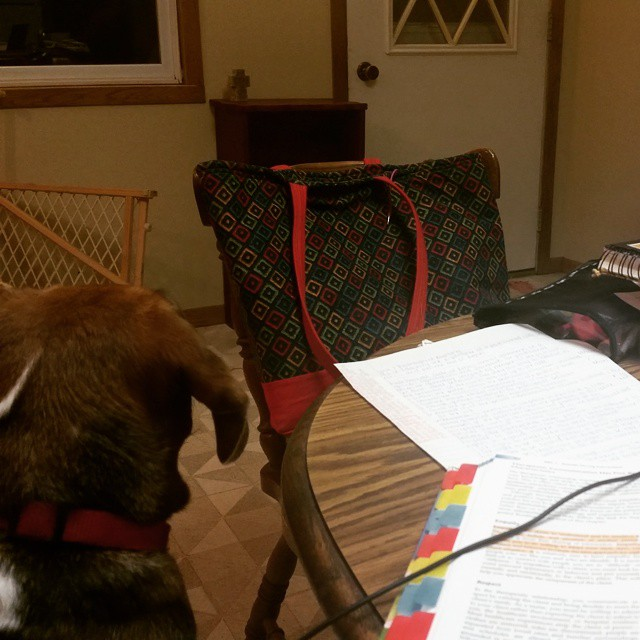 Helping with homework while she's waiting for her best friend Jason to come home! #joscountryjunction #beaglelove