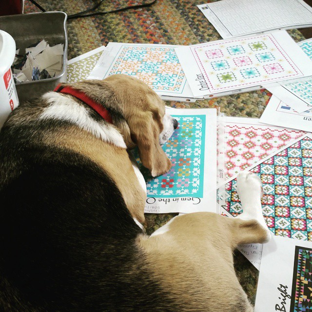She just wants to help! #joscountryjunction #beaglelove