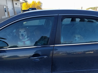 Dogs 2 (400x300)